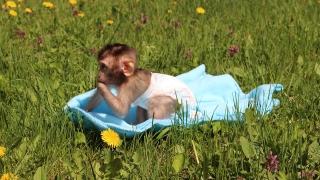 Алф чукна една годинка в софийския зоопарк (СНИМКИ)