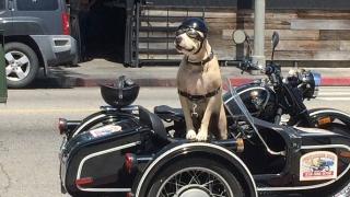 Снабдиха кучетата в британската армия с очила и ботуши