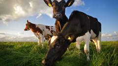 С 3,5 млн. лева купуваме ваксини срещу нодуларен дерматит по животните
