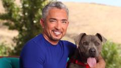 Запиши кучето си за среща със Сизър Милан
