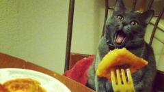 Уникални фотоси на котки (СНИМКИ)