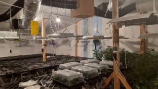 Разкриха огромна наркооранжерия във ферма за криптовалута в Пазарджишко
