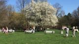 В София два пъти са обработвани паркове и градинки срещу кърлежи